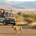 Pilanesberg-Open-Vehicle-4
